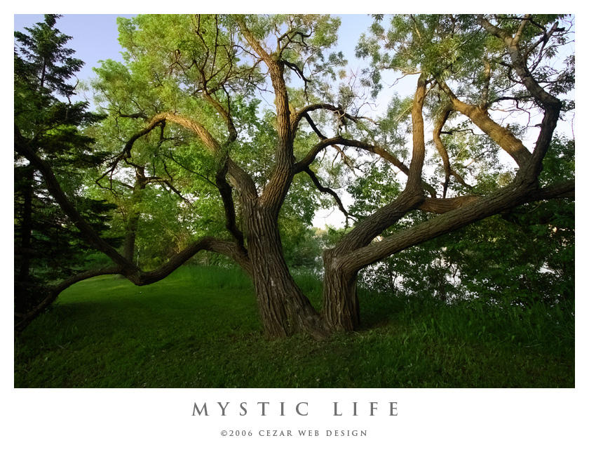 Mystic Life by cezars
