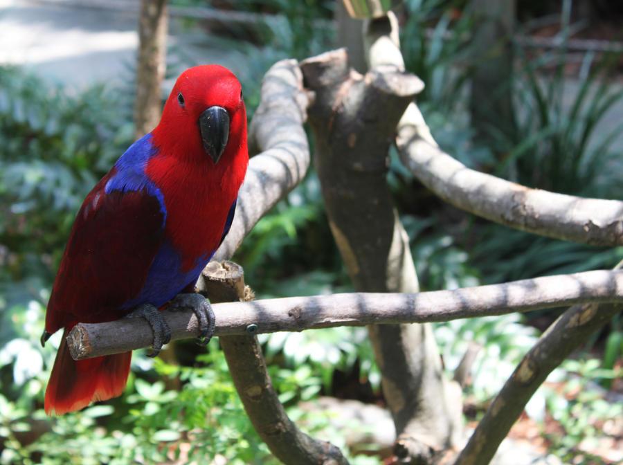 Pretty Birdie by MzzAzn