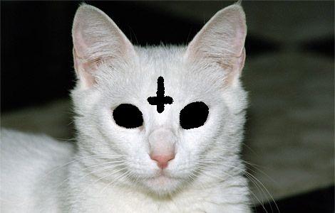 Wolf gang cat by modrat d5eawzu
