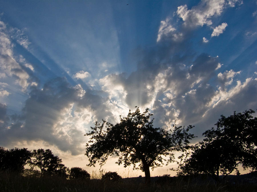 tree and clouds3 by archaeopteryx-stocks