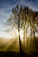 Tree in the fog3 by archaeopteryx-stocks