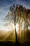 Tree in the fog3