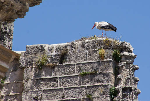 stork with baby on a church