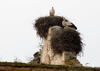 storks with baby on a church