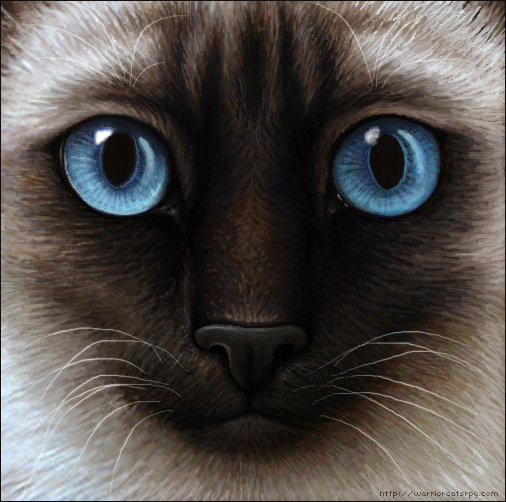 Warrior cats siamese cat by wynnyelle