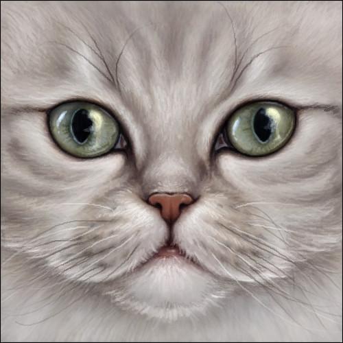 Cat Avatar Maker 2: Wynnyelle (Wynnyelle)