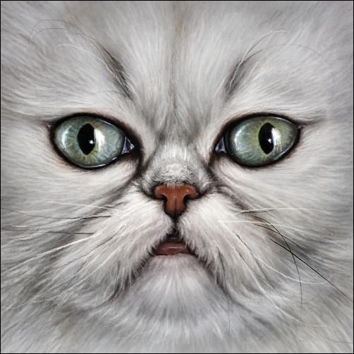 Cat Avatar Maker 2: Chinchilla Persian Cat 2 By Wynnyelle On DeviantArt