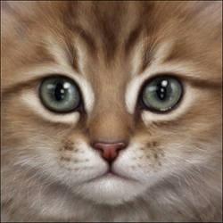 Golden Tabby Persian Kitten by Wynnyelle