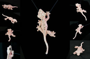 Dal Crested Gecko Necklace