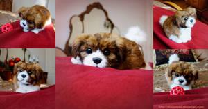 Poseable Havanese Puppy