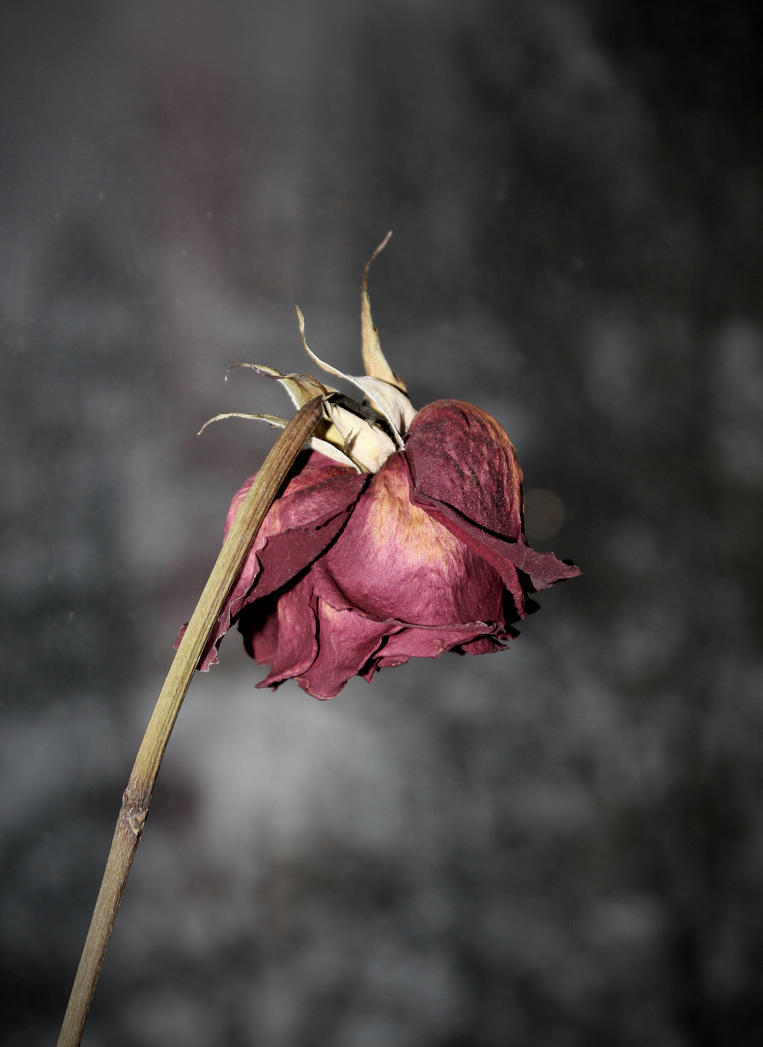 how to make potpourri from dead roses