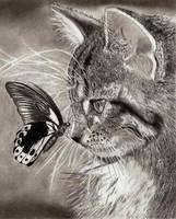 Cat by TeSzu