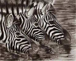 Zebras by TeSzu