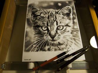 Cat TeSz by TeSzu