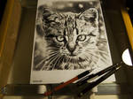 Cat TeSz