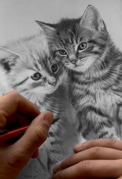 kittens WIP
