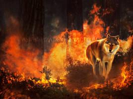 burn them all by Amphispiza
