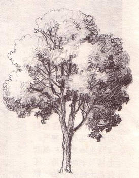 Uncolored Tree