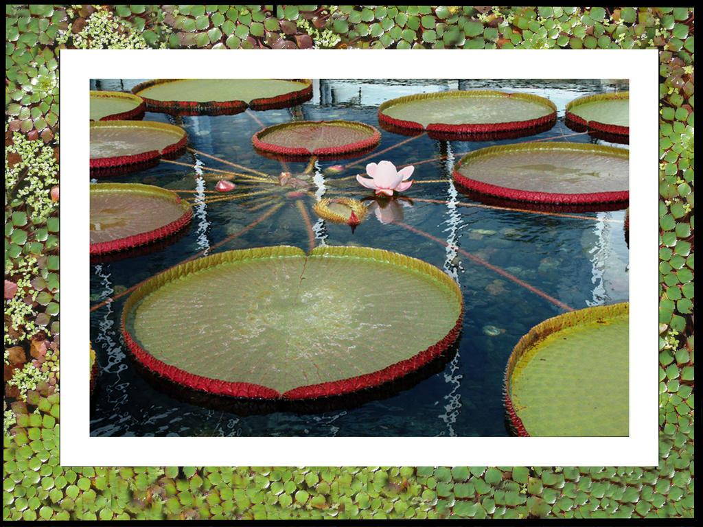 Lily Pad View 01 by buildingclimber