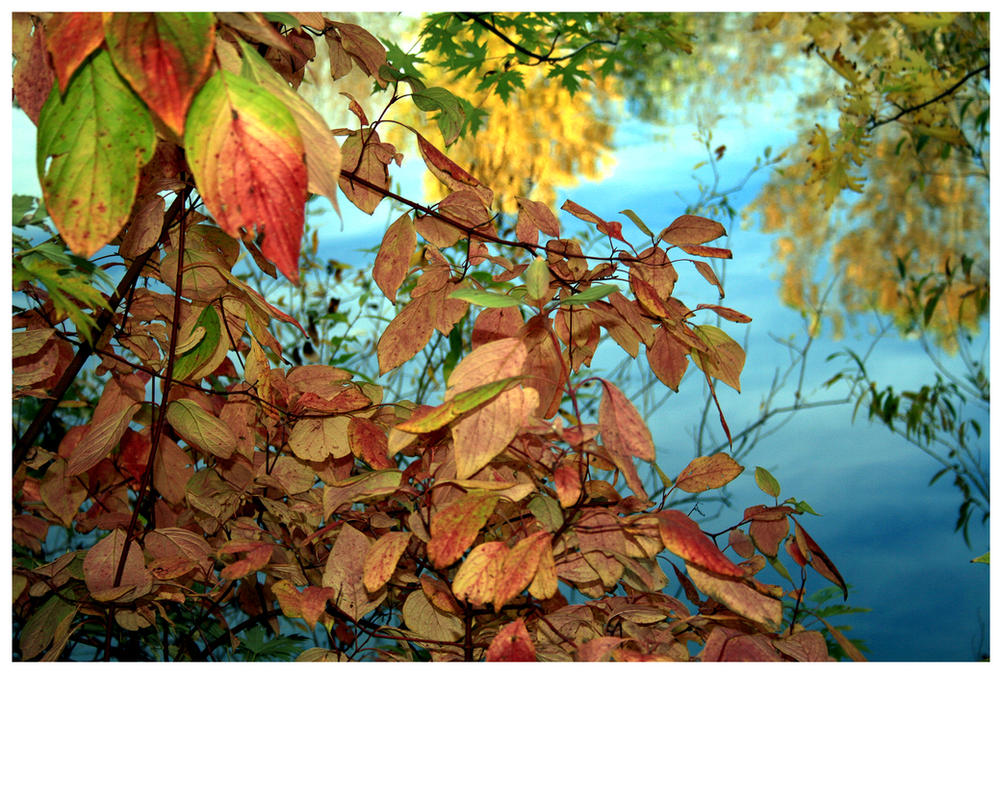 Autumn View by buildingclimber