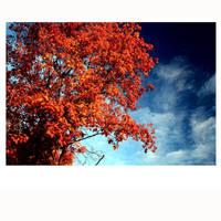 5x5 Autumn Palette View 06