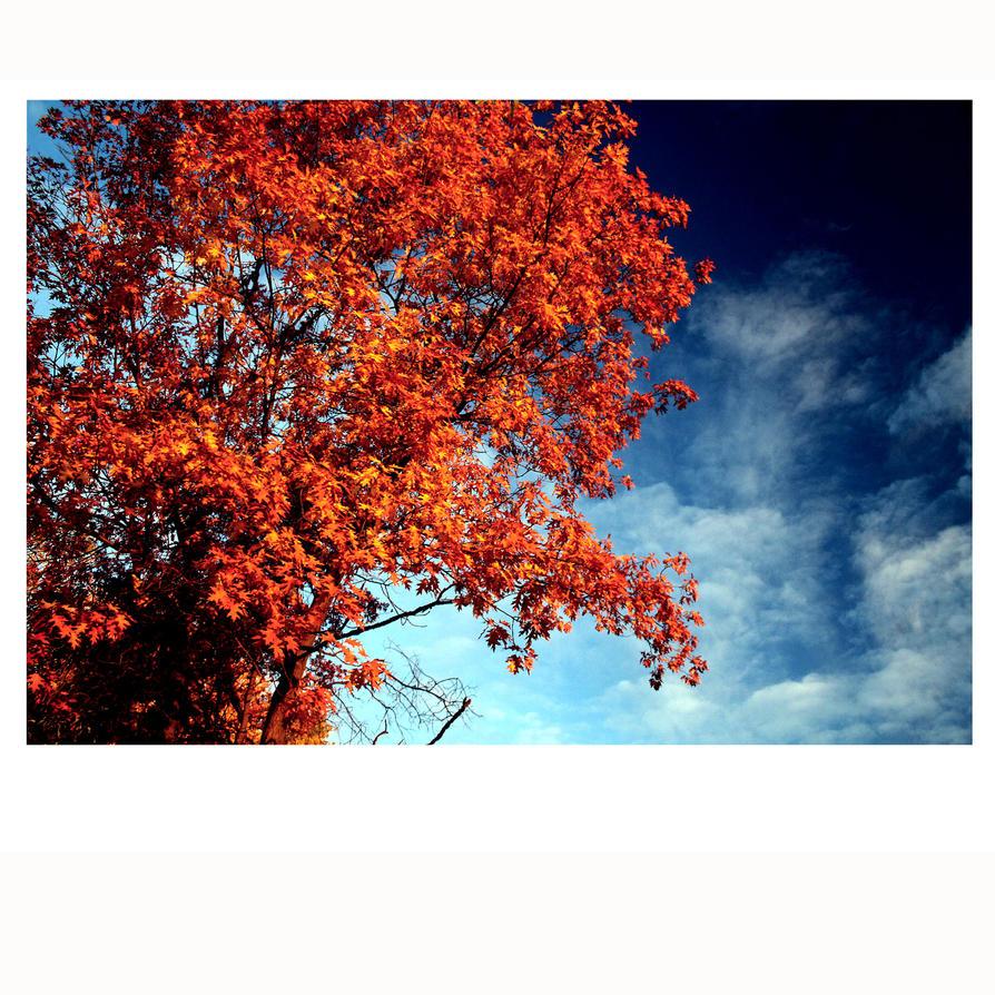 5x5 Autumn Palette View 06 by buildingclimber