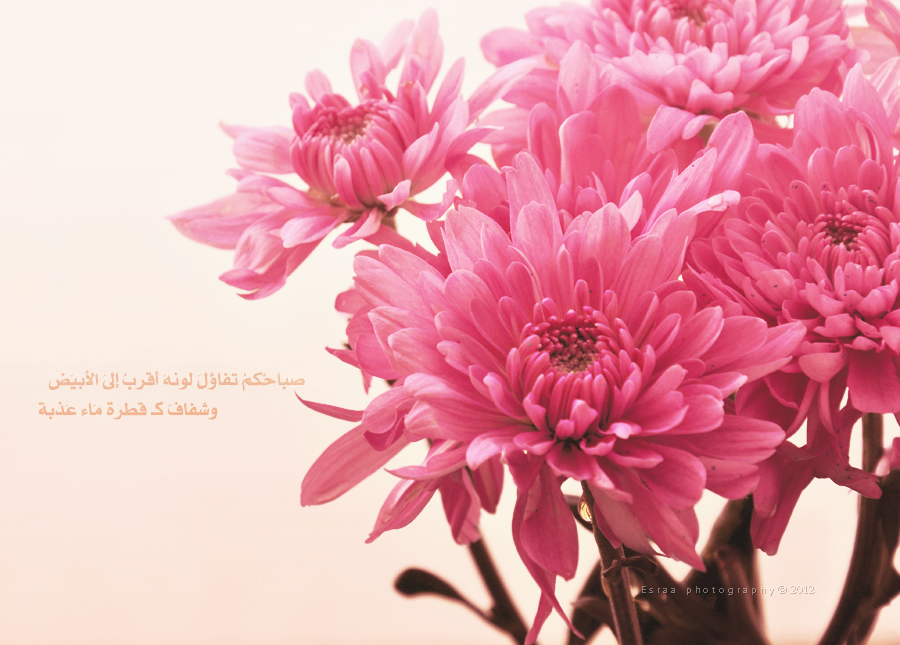 beauty flowers by esraahussein on deviantart, Beautiful flower