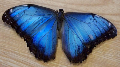 Butterfly 1 by RD-Stock
