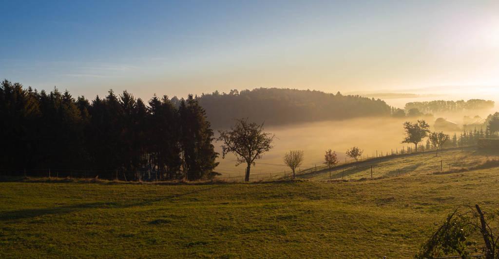 Golden Morning by Nilarii