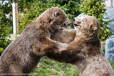 Zoo 21 - Polar Bear Fight by RyBH