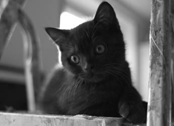 Kitty by andreaofstad