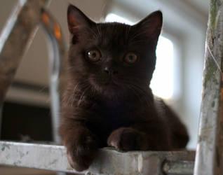 Kitten by andreaofstad