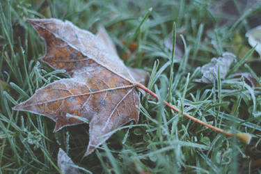 Leaf I by andreaofstad