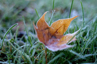 Leaf II by andreaofstad