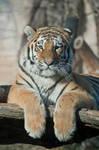 Tiger, Hluboka I