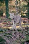 Lynx, Pforzheim VIII
