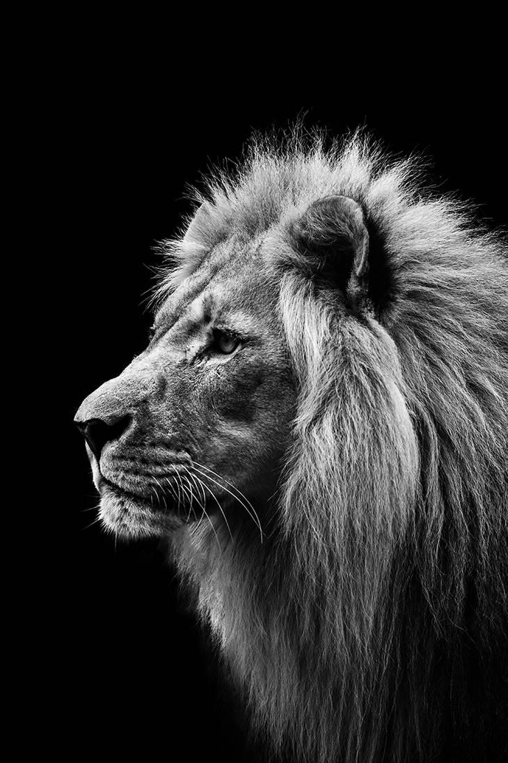 Lion, Salzburg IV by Areksim