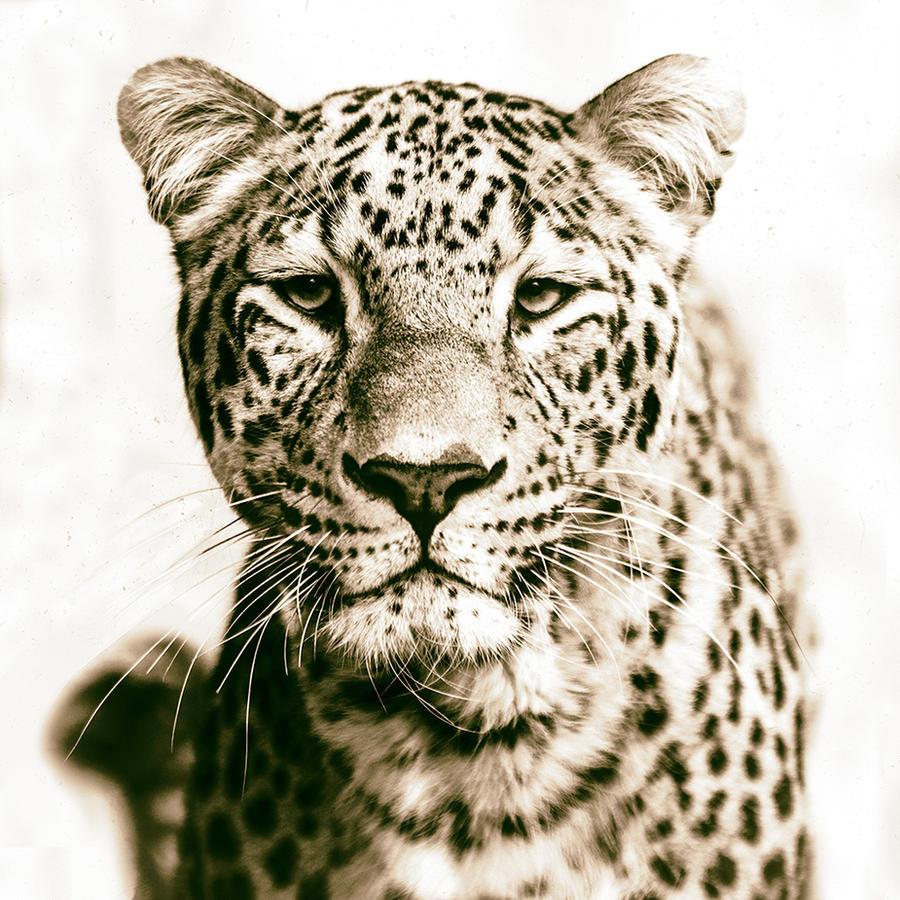 Leopard, Stuttgart I by FGW-Photography