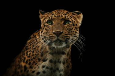Leopard, KA V by Areksim