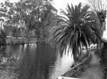 Lagoon 03 - Black and White