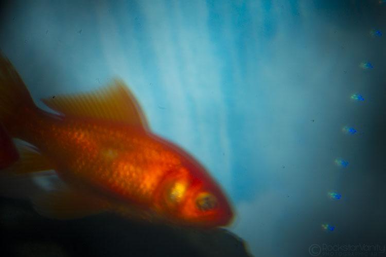 Holga Fish 03 WEB by RockstarVanity