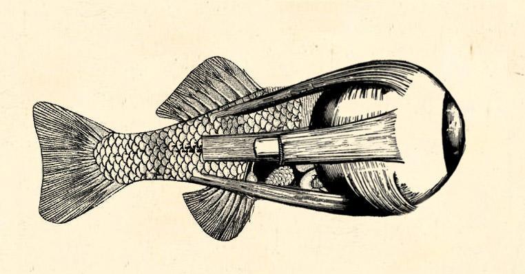 Fish-Eye by diablien