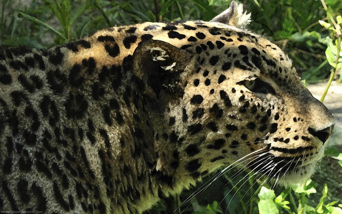 Leopard Background by TheDarkDesert