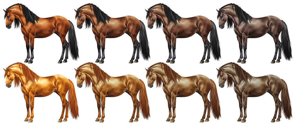 Different chestnut and bay (and other) shades - Forum Topic - Equiverse