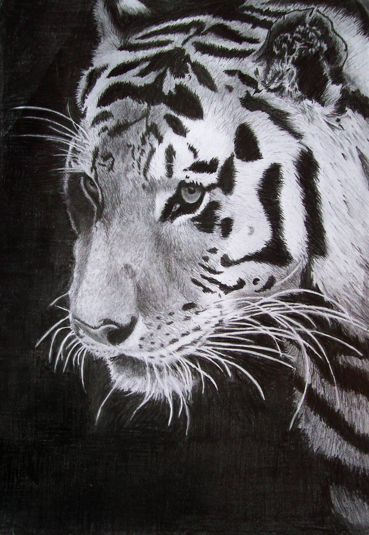 Tiger out of the Black