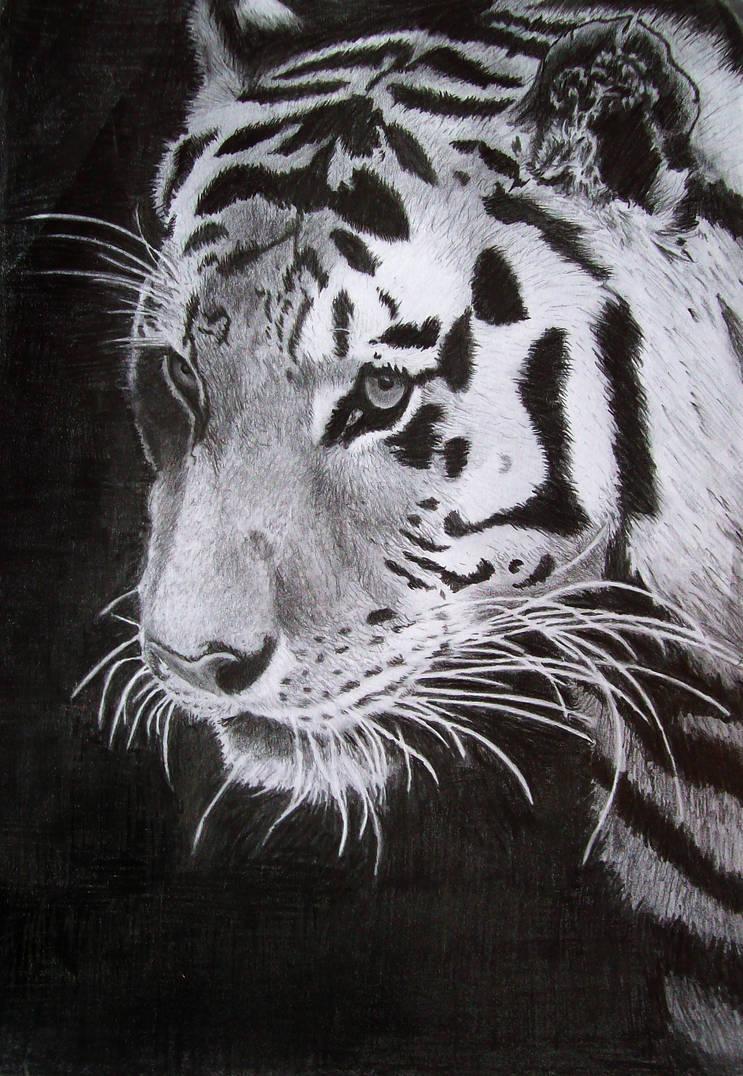 Tiger out of the Black by Frankenstijn