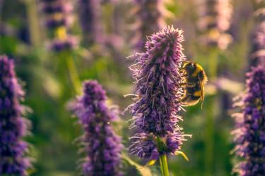 Bumblebee by Frankenstijn