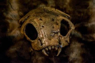 Skull by Frankenstijn