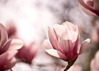 In Bloom by imveryconfused