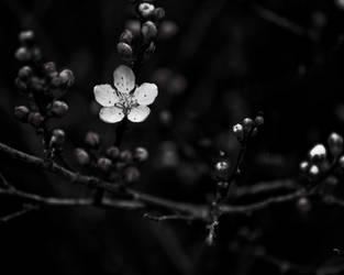 Hope by imveryconfused